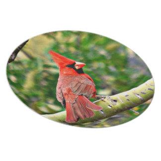 Prato Cardeal em uma placa da melamina do membro