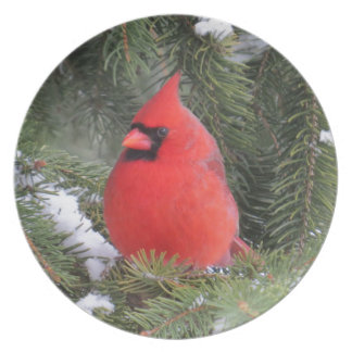 Prato Cardeal Spruce
