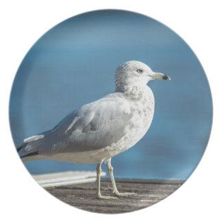 Prato Chame-me M.Seagull