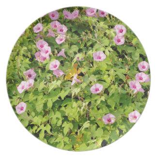 Prato Corriolas cor-de-rosa Bush