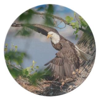Prato De Festa Águia americana que sae do ninho