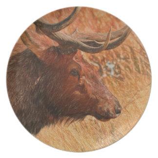 Prato De Festa Alces de Bull