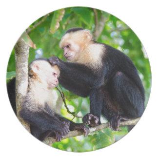 Prato De Festa Amor do macaco