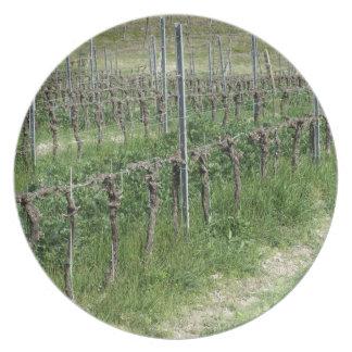 Prato De Festa Campo desencapado do vinhedo no inverno. Toscânia,