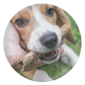 Prato De Festa Cão com vara
