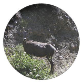 Prato De Festa Carneiros de Bighorn da montanha rochosa, ovelha