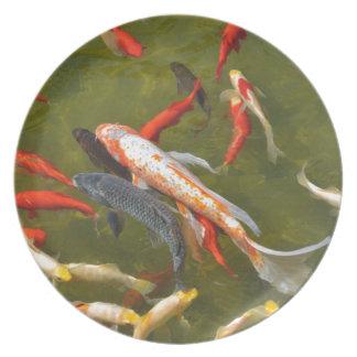 Prato De Festa Carpas de Koi na lagoa