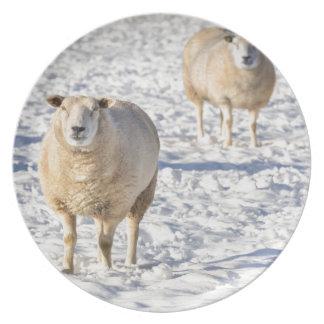 Prato De Festa Dois carneiros que estão na neve durante o inverno