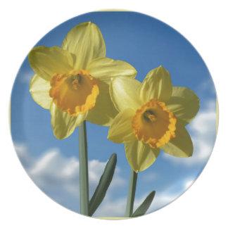 Prato De Festa Dois Daffodils amarelos 2,2