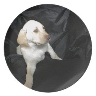 Prato De Festa Filhote de cachorro amarelo Sadie do laboratório