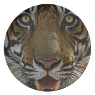 Prato De Festa Fim da cara do tigre acima
