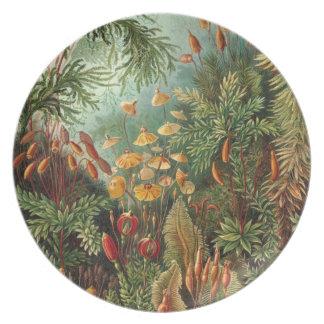 Prato De Festa Flora da floresta