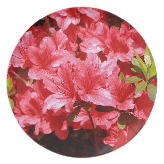 Prato De Festa flores do vermelho da azálea