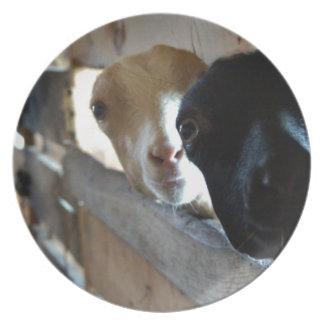 Prato De Festa Foco da cabra