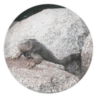 Prato De Festa Iguana selvagem