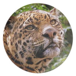 Prato De Festa Jaguar inquisidor