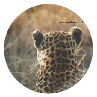 Prato De Festa Leopardo que olha fora na distância