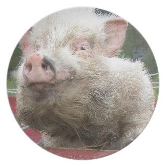 Prato De Festa Mini placa cor-de-rosa bonito do porco
