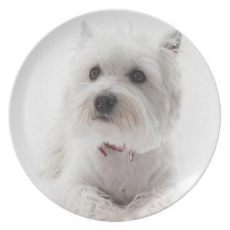 Prato De Festa Montanhas ocidentais brancas adoráveis Terrier