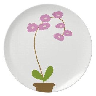 Prato De Festa orquídeas