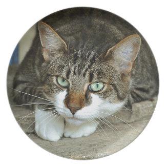 Prato De Festa Os olhos de gato