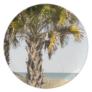 Prato De Festa Palmeiras no passeio à beira mar da costa leste de