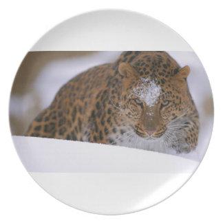 Prato De Festa Pares raros de um leopardo de Amur sobre uma