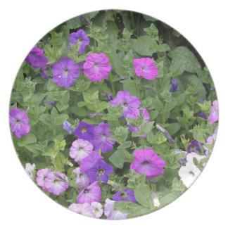 Prato De Festa Petúnia roxo do tema do jardim do primavera das