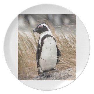 Prato De Festa Pinguim africano na praia