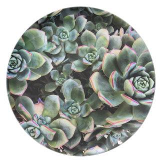 Prato De Festa Placa fotográfica da melamina dos Succulents de