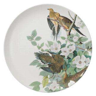 Prato De Festa Pomba da tartaruga de Carolina, pássaros de