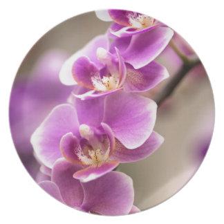 Prato De Festa Profundamente - corrente de flor cor-de-rosa da