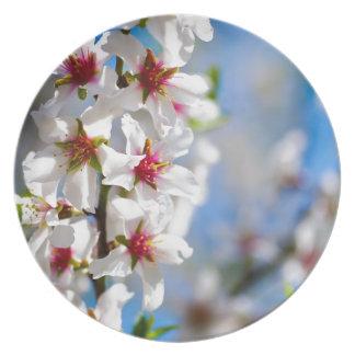 Prato De Festa Ramo de árvore de florescência com flores brancas
