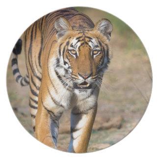 Prato De Festa Rapina de desengaço do Tigress fêmea