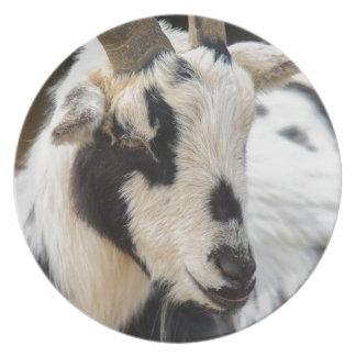 Prato De Festa Retrato da cabra