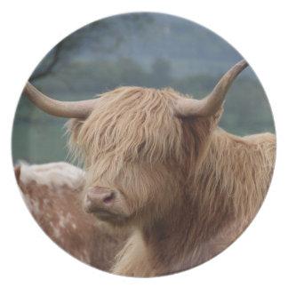 Prato De Festa retrato do gado das montanhas