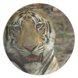 Prato De Festa Tigre bonito e sorrindo