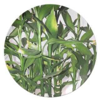 Prato De Festa Tiros de bambu e folhas verdes