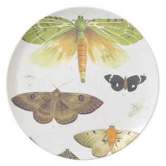 Prato De Festa Traças e borboletas de Nova Zelândia