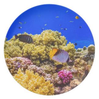 Prato De Festa Um recife de corais no Mar Vermelho perto de