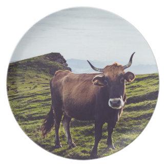 Prato De Festa Vaca bovina na paisagem bonita