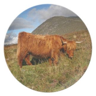 Prato De Festa Vacas escocesas das montanhas - Scotland