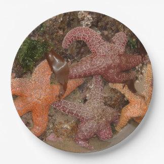 Prato De Papel A estrela do mar/estrelas de mar no canhão