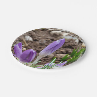 Prato De Papel Açafrões do primavera