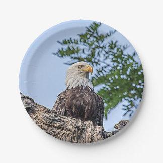 Prato De Papel Águia americana em um ramo de árvore