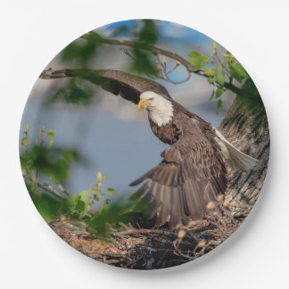 Prato De Papel Águia americana que sae do ninho