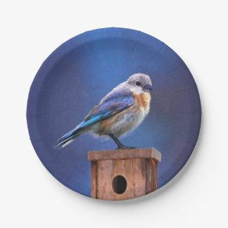Prato De Papel Bluebird (fêmea)