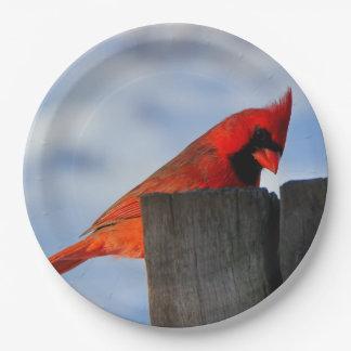 Prato De Papel Cardeal vermelho no coto de madeira