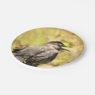 Prato De Papel Catbird cinzento que canta a sua canção a placa de