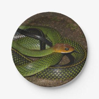 Prato De Papel Cobra de rato verde de Bush